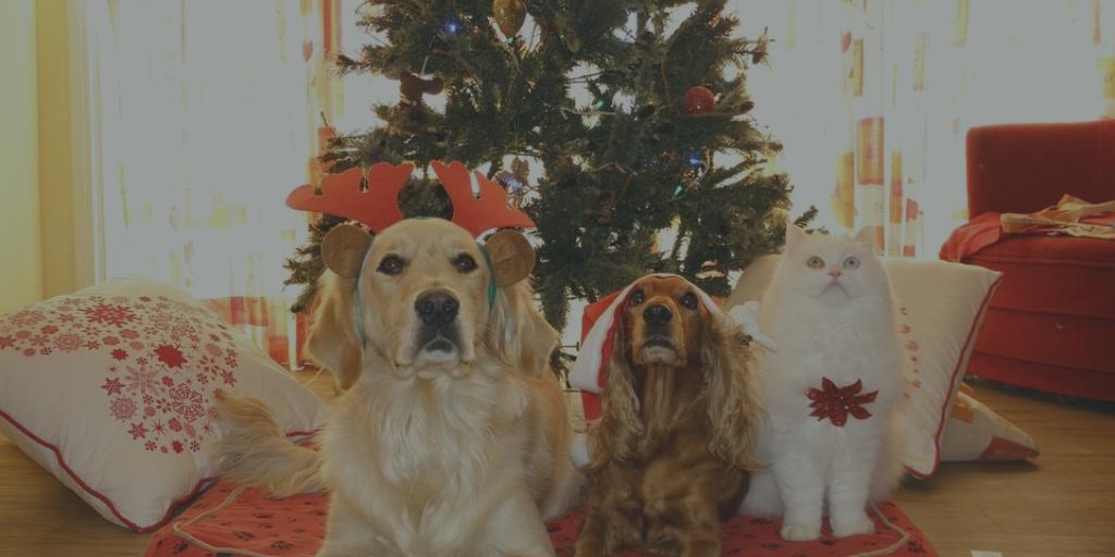 Doggy Christmas List
