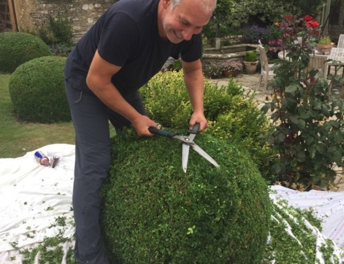 Mike's Gardening Tips on Box Ball Pruning